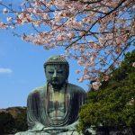 鎌倉の桜の開花時期2017。名所の花見スポットと満開予想は!