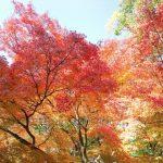 京都の紅葉2017の見ごろ時期は?おすすめスポットは?