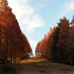 昭和記念公園 紅葉2017の見頃時期は?まつりはいつ?