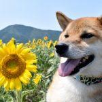 飼いやすい犬ランキングTOP5!